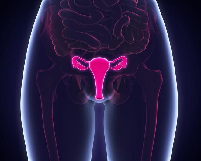 Female Reproductive System Illustration. 3D render