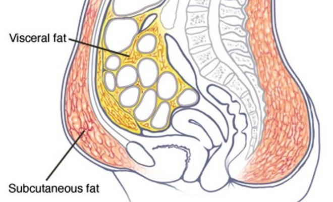 Different Types Of Stomach Fats And How To Lose It1